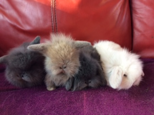 bunnies at half term