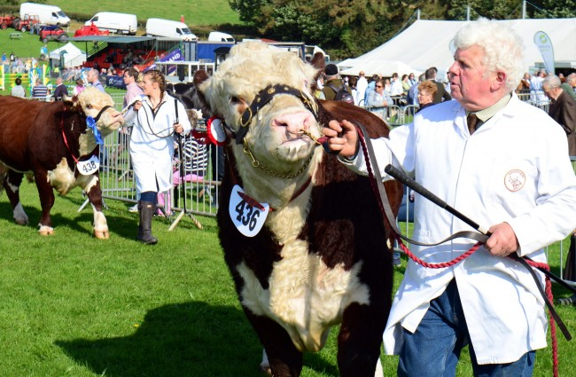 County Show014